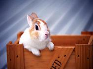 兔子窝怎么摆放比较合适