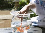鱼缸造景的注意事项