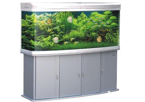 观赏鱼缸养鱼要注意什么|水族环境-波奇网百科大全
