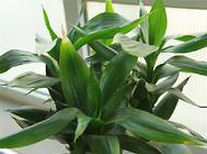养盆栽是缓解压力的好方法
