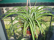 常见的室内水生植物大盘点