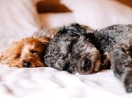 狗狗香波的类型有哪些?