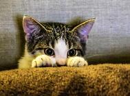 伟嘉猫粮的营养如何?