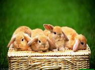 必备的宠物兔用品有哪些