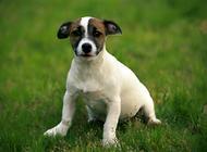 如何挑选小狗营养膏