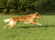 牵引绳——防止狗狗走丢的重要工具