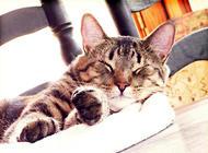 猫咪绝育后一定会发胖吗