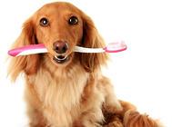 一定要给必威官网下载用必威官网下载牙膏么?
