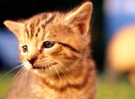 猫咪使用化毛膏需要注意什么