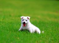 福莱恩滴剂——宠物驱虫好帮手