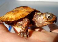 宠物龟饲养消毒药物推荐