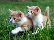 你的猫砂盆放对地方了吗