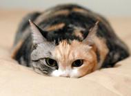 宠物致死原因  肥胖症占首位