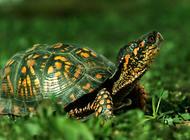 巴西龟夏天不吃东西怎么办