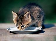 夏季给猫咪补水的重要性