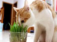 必威体育appios吃草的原因,主人要对症下药