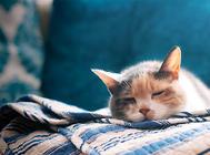 夏天除了要防止猫咪中暑,预防空调病也很重要