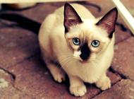 猫眼晚上会发亮的秘密