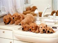 狗狗不宜洗澡的6种情况