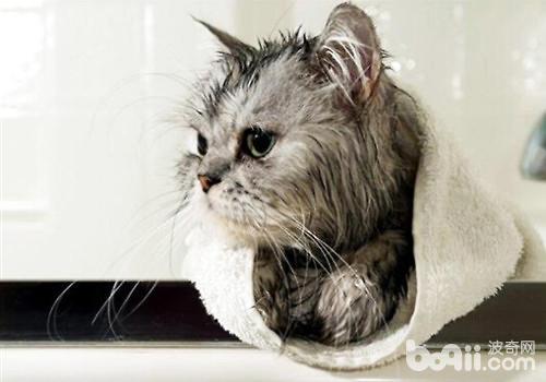一种猫咪免水干洗的方法