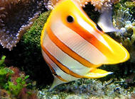 热带鱼的用水有特定的要求吗?