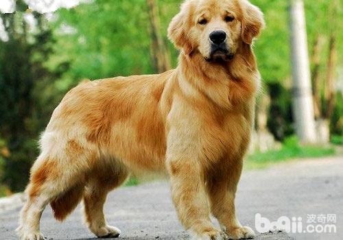 那些广告中出现的狗狗都是什么品种?