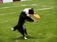 带狗狗运动的一些注意要点