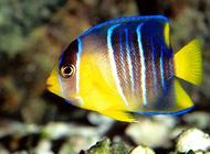 热带鱼可以和什么种类的观赏鱼混养?