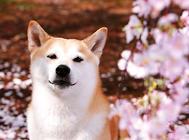 體味最輕的狗狗前五名
