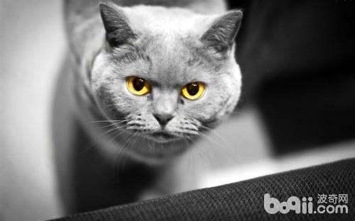 三种常见的猫咪皮肤病