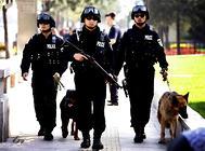 中国国内的七种警犬介绍