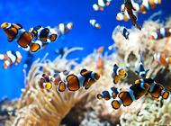 热带鱼喂什么好?