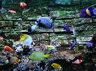 海水鱼喂养的一些注意事项