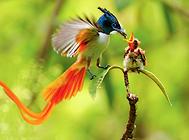 鸟类的智商高么?