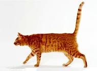 想要了解猫咪 就去看看它的尾巴吧