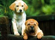 导盲犬的训练过程是怎样的?