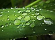夏季怕雨淋的花草有哪些