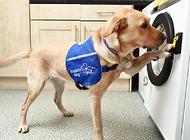 服务犬能帮助主人改善心理状态