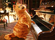加菲猫和波斯猫的关系