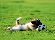 带狗狗运动的注意事项