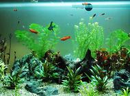 孔雀鱼最适宜的水温是多少?