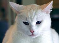 猫的能量需求是什么?