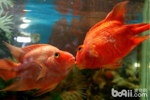 喜欢鱼不接吻女生的和接吻说话男生图片