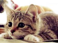 猫咪神药化毛膏究竟神在哪里?
