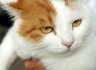 猫咪记仇该怎么办