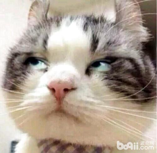 猫记仇怎么办