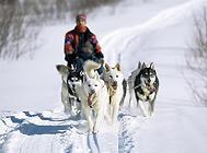 除了雪橇三傻,另外六种鲜为人知的雪橇犬