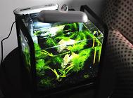 鱼缸放在卧室影响健康