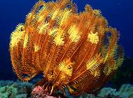 水族箱中的珊瑚是怎么繁殖的?