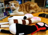 选择猫咪玩具的几个注意事项